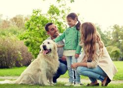labrador retriever family